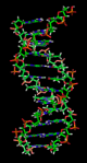 the DNA double helix is a spiral polymer of nucleic acids