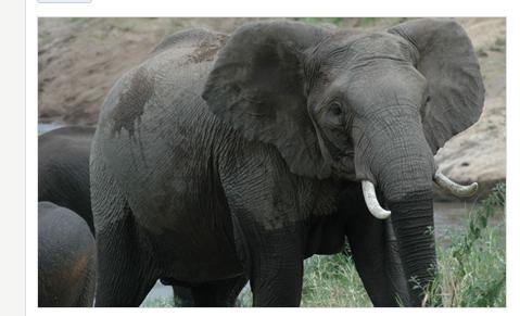 elephant_shot