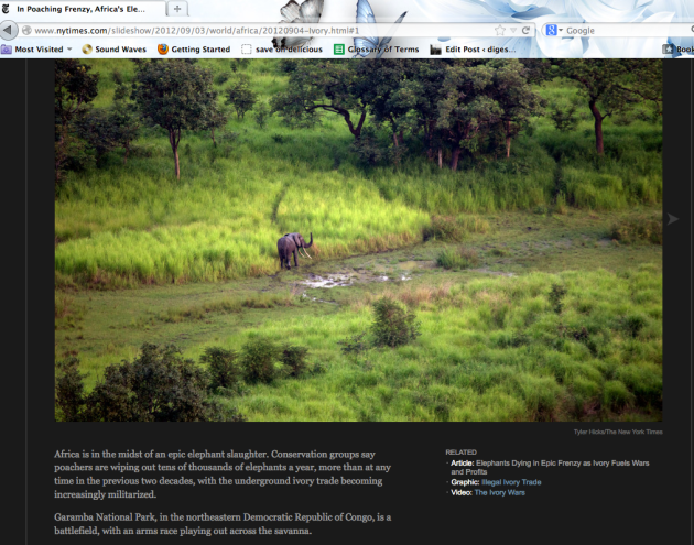 nytimes_poaching_frenzy_africas_elephants_wiped_out