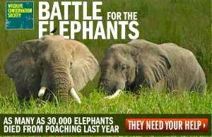 wildlife_conservation_society_battle_for_the_elephants