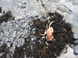 crab remains