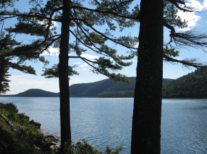 water through pines Acadia Natl. Park