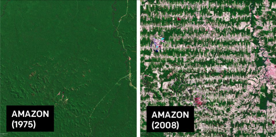 Amazon Rain Forest 1975 2008 via Satellite