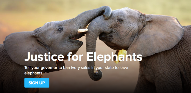 DoSomething Justice for Elephants Signup