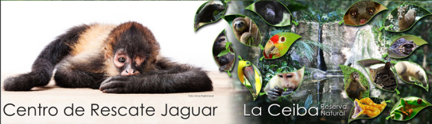 La Ceiba Reserva Natural  - Centro de Rescate Jaguar, La Ceiba Nature Reserve, Jaguar Rescue Center