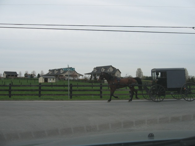 amish_buggy_beechdalle_rd