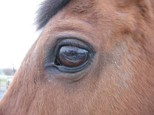 new_horse_eye