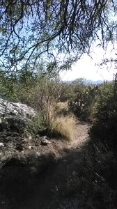 path to finger rock