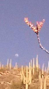 flowering moon