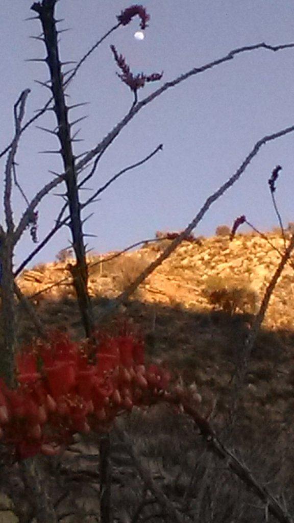 moon flower desert cliffs