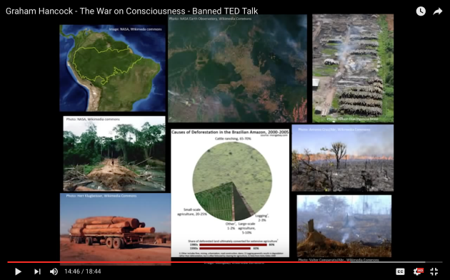 Graham Hancock - The War on Consciousness Amazon rainforest - the lungs of the earth - cleared to plant industrial soybean to feed cattle to make hamburgers.