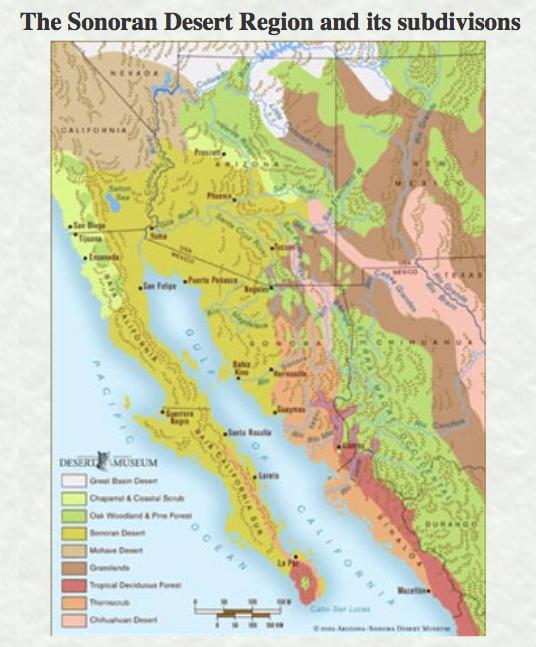Sonoran desert region, subdivision , sonoran desert museum