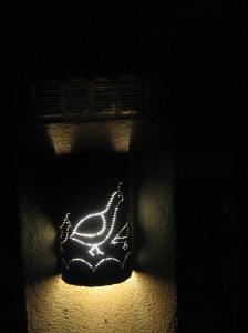 lantern quail
