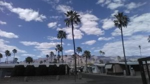 clouds, palms, Sonoran Desert