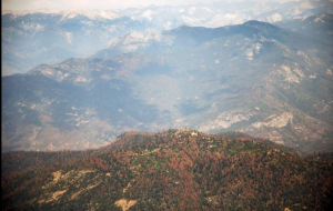 Dead trees sweeping across the Sierras, California's dying forests