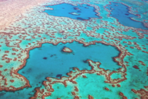 Great Barrier Reef officially declared Dead after 25 million years