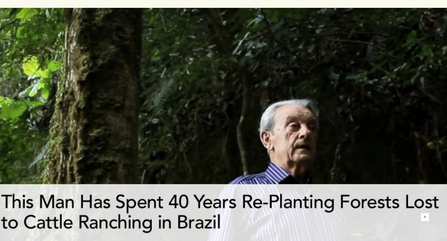 Antonio Vicente, reforested, deforested, cattle ranching, Brazil