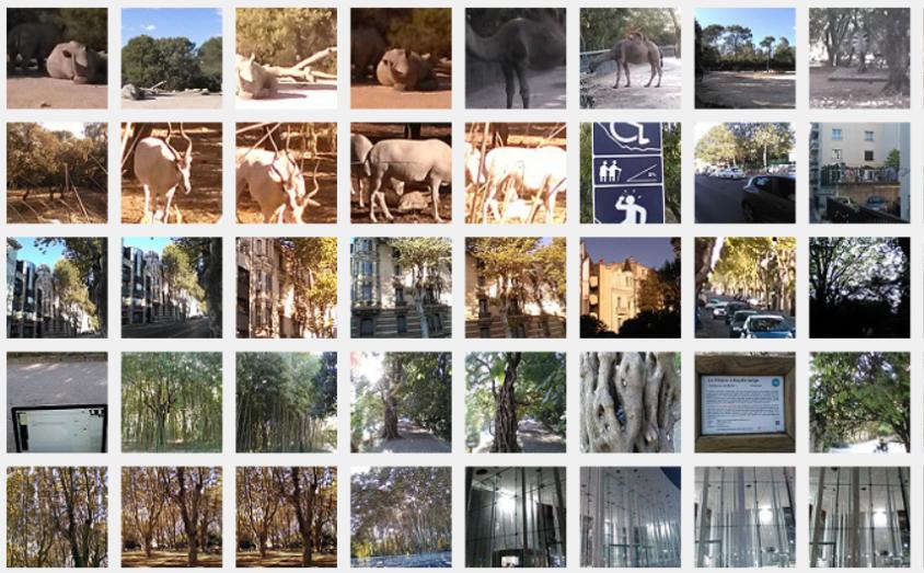 Montpellier Zoo, Jardin des Plantes