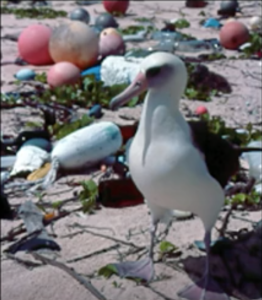 Animals, Carl Safina, Albatros, Plastic