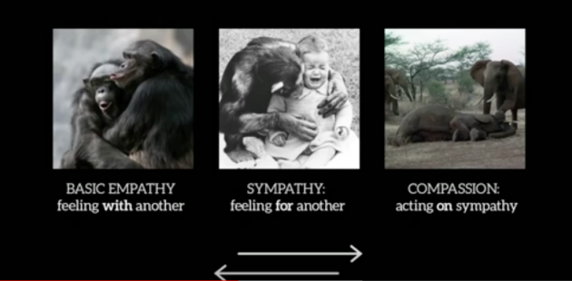 Animals, Carl Safina, Empathy, Sympathy, Compassion