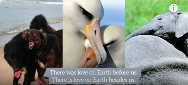 There is Love on Earth Besides Humans