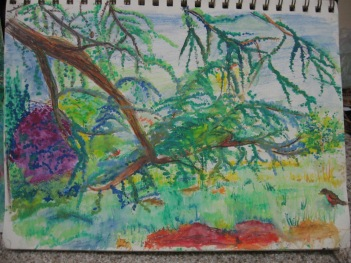 Roger Williams park, Providence, Rhode Island, Elegant Tree and Robin, Progressive creation, captivating tree, Botanical Gardens, Faber Castell Water Color Pencils, May 12, 2018