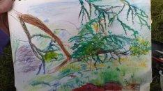 Elegant Tree and Robin progression