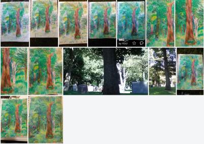 Black Oak Paper Birch Tree Progression , Trees and Sunlight , art, painting, Faber Castell Watercolor pencils, Carol Keiter