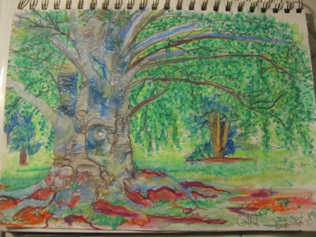 Faber Castell watercolor pencil, painting, European Beech Tree