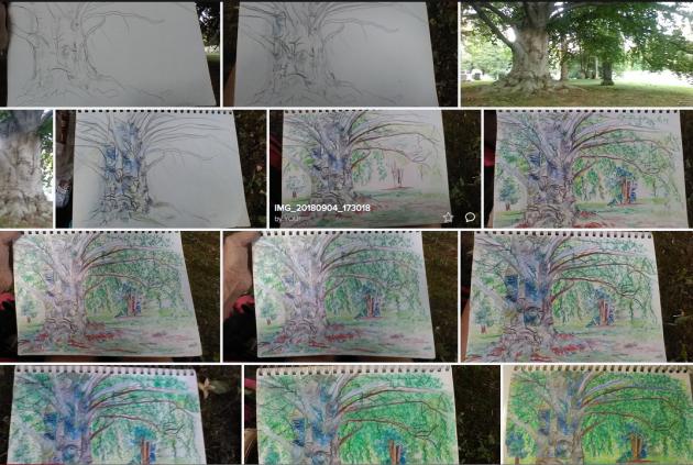 Flickr European Beech Tree, Swan Point Cemetery, Providence, Rhode Island