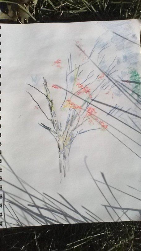 Eastern Hemlock Art Progression, Faber Castell watercolor pencils, Swan Point Cemetery, Providence, RI, September 2018, Carol Keiter