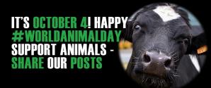 Happy World Animal Day