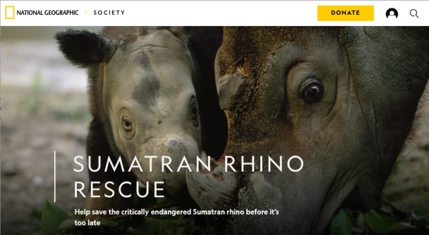 Sumatran Rhino Rescue, National Geographic