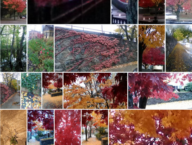 autumn leaves, colors, Northeast, North America