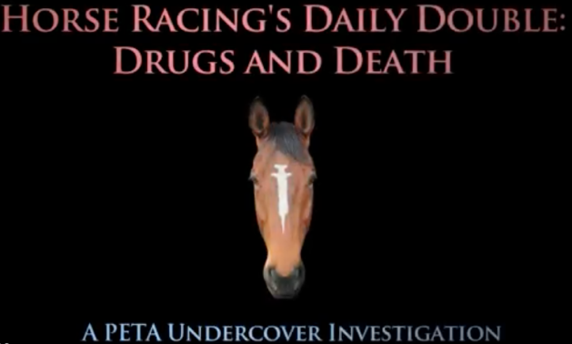 Horse Racing Drugs and Deaths PETA undercover investigation PETA