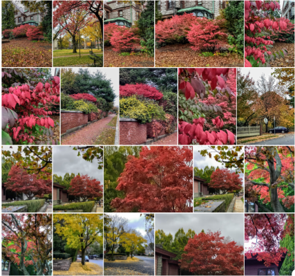 Providence, Rhode Island, autumn leaves, four seasons