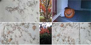 nov 7, autumn leaves, photo album beauty, natural world
